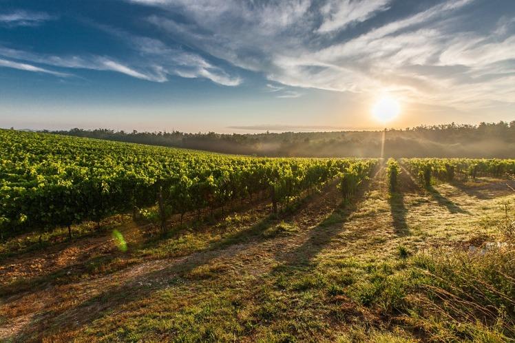 tuscany-428041_1280.jpg
